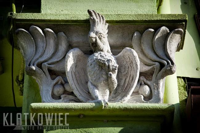 Jasień. Secesyjna kamienica. Detal z papugą.