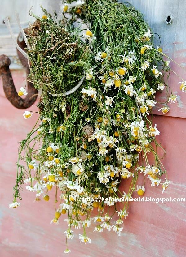 Kefalonia Camomile (chamomile) Tea
