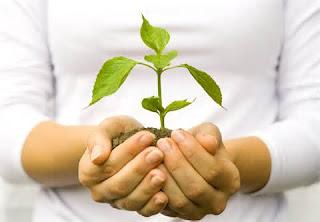 Growing plant in women's hands