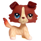 Littlest Pet Shop Special Collie (#1262) Pet