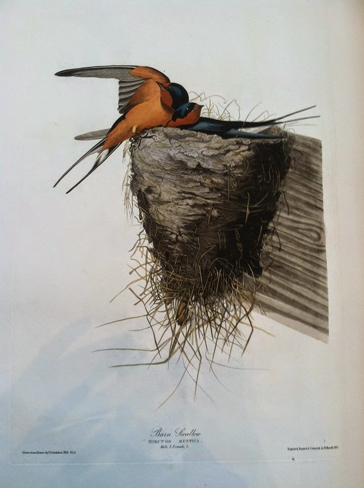 A painted image of two barn swallows in their nest.