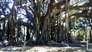 Jardim botânico de Monreale