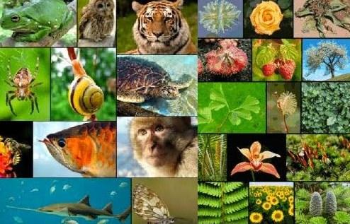 Klasifikasi Makhluk Hidup Berdasarkan Ciri-ciri