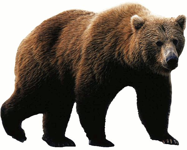AVEEK- Blogs: Mountain Lion