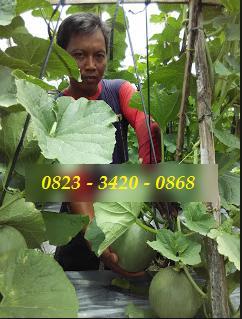 AGEN NASA DI  Dolok Silau, Simalungun - TELF 082334020868