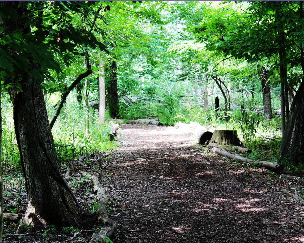 nature walk quiet lost zen smallest invites closest lay inspection henry leaf bear eye level david she