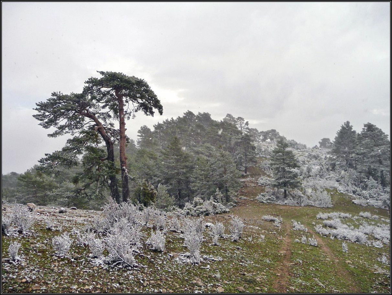 Cerro De La Tajada