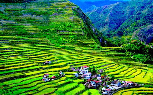 Banaue Rice Terraces (Banaue, Luzon, Philippines)