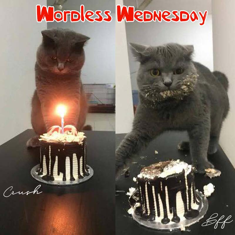 wordless wednesday, birthday, crush, best friend,