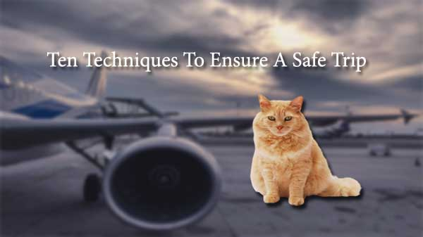 how to fly with an in-cabin pet