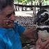 Dindim, Penguin Yang Mengenang Budi Penyelamatnya