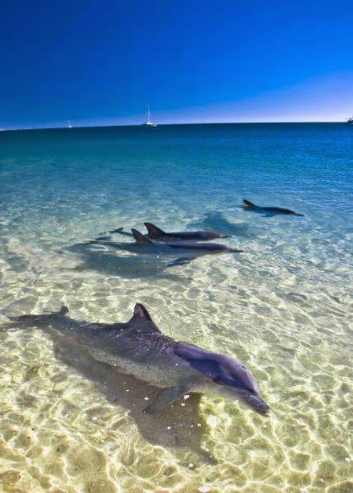 Dolphins at Monkey Mia, Australia | Australia the perfect land photography lovers