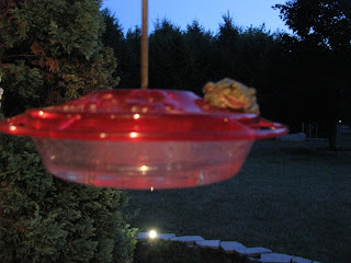 toad on hummingbird feeder