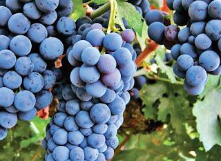 pareri viticultura bidinamica cursul viitor al viticulturii