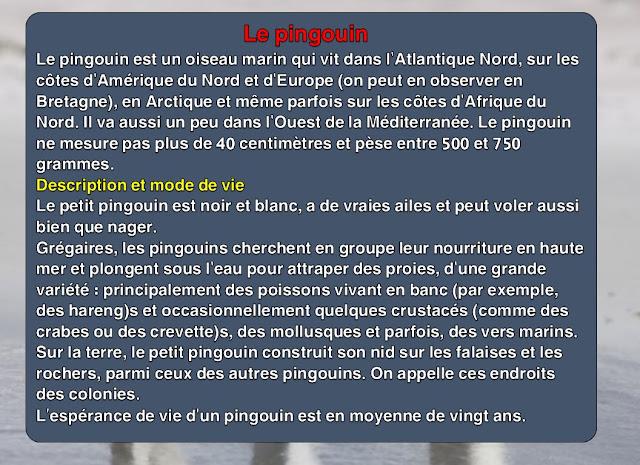 وصف حيوان البطريق بالفرنسية
