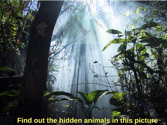 Hidden Faces Picture Puzzle