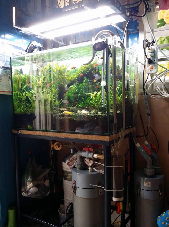 Bể thủy sinh 60 cm trang bị 2 lọc thùng PVC