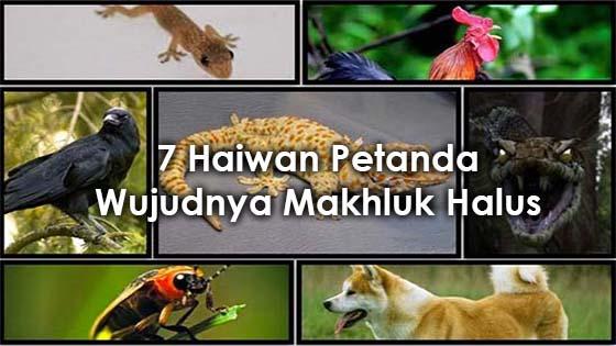 Haiwan yang Menandakan Wujud Makhluk Halus di Sekitar Anda