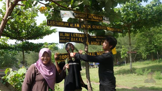 Pembibitan Mangrove