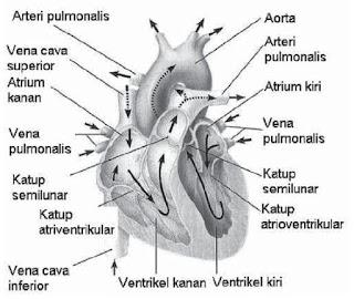 Pengertian Organ dan Struktur Organ Pada Tubuh Manusia, Hewan dan Tumbuhan