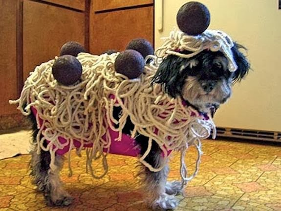 Funny Halloween Costumes for Cats. Funny-Animals-Ready-Pic & Funny Halloween Costumes for Cats | Amazing u0026 Latest Pictures ...