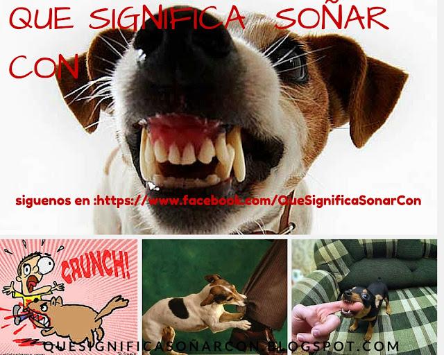 que pasa cuando un perro nos muerde en sueños - http://xn--quesignificasoarcon-83b.blogspot.com/2015/10/que-significa-sonar-que-un-perro-me.html