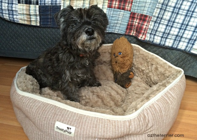 senior dog comfort with trustypup remedy rest bed