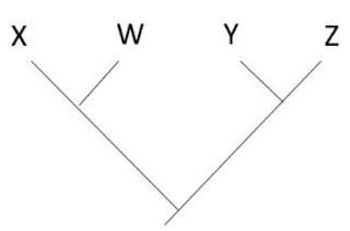 SLMandic A árvore filogenética apresentada abaixo é uma hipótese para as relações evolutivas entre quatro espécies