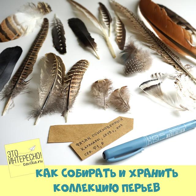сбор и хранение коллекции перьев птиц