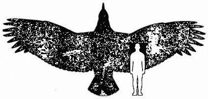 Tier Welt Der Größte Fliegende Vogel