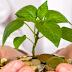 ZPP Meio Ambiente: Dez dicas para economizar dinheiro e ajudar o meio ambiente