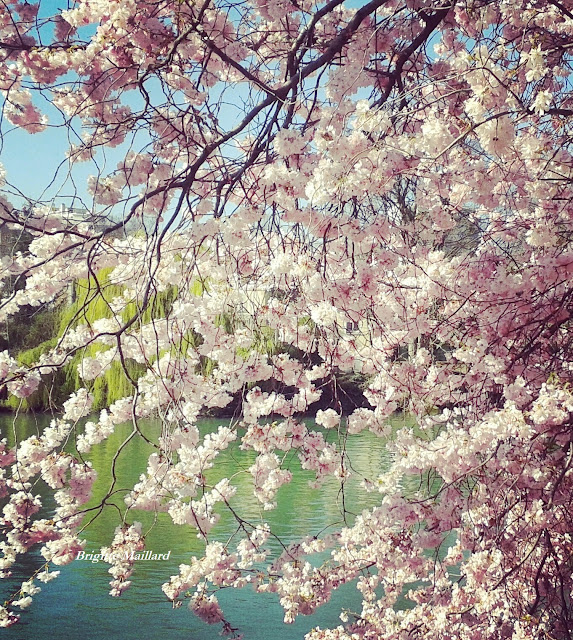 Le printemps Brigitte Maillard