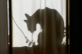 Doctor Pyewacket, the cat, shown as a shadow behind a curtain