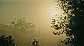 Cloud Walk - Resorts in Thekkady