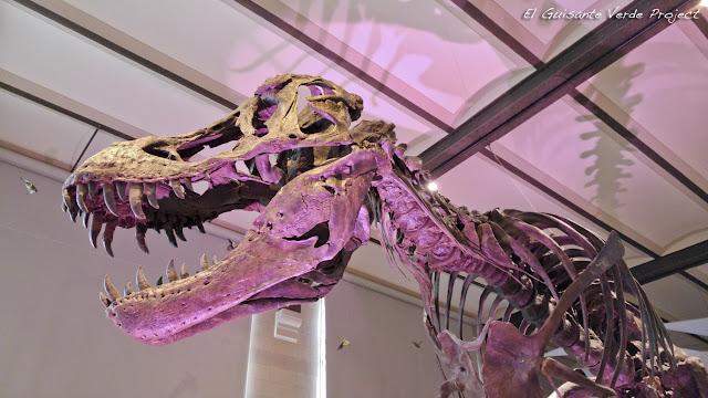 100Masters - Museo Ciencias Naturales de Bruselas por El Guisante Verde Project