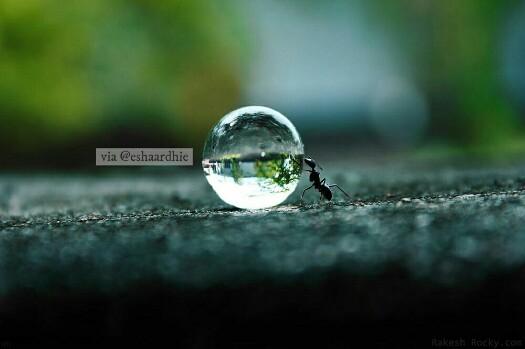 Kisah Semut Menolong Nabi Ibrahim