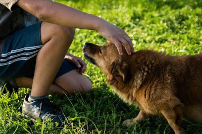 8 beneficios reales de tener perro que te sorprenderán