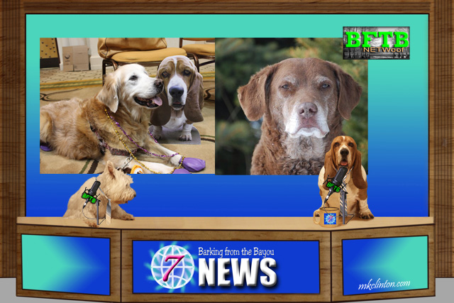BFTB NETWoof News honors Sugar the Golden Retriever and Nellie the Chessie