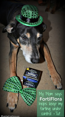 rescued senior dog dressed for St Patricks Day Purina FortiFlora
