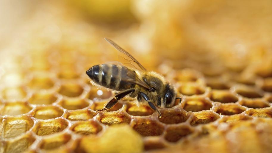 Blog de maman deuxfoismaman parent et enfants d couvrons le pain d 39 abeille bio avec l - Qu est ce qui fait fuir les abeilles ...