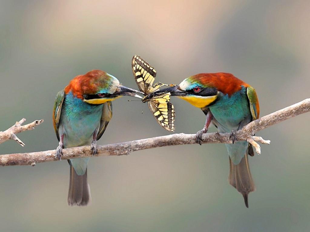 Wallpaper Gallery Love Bird Wallpaper: Darling Birds-Cutest Creature Of Nature In Some Intimate