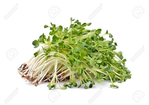 Alfalfa Faydalari