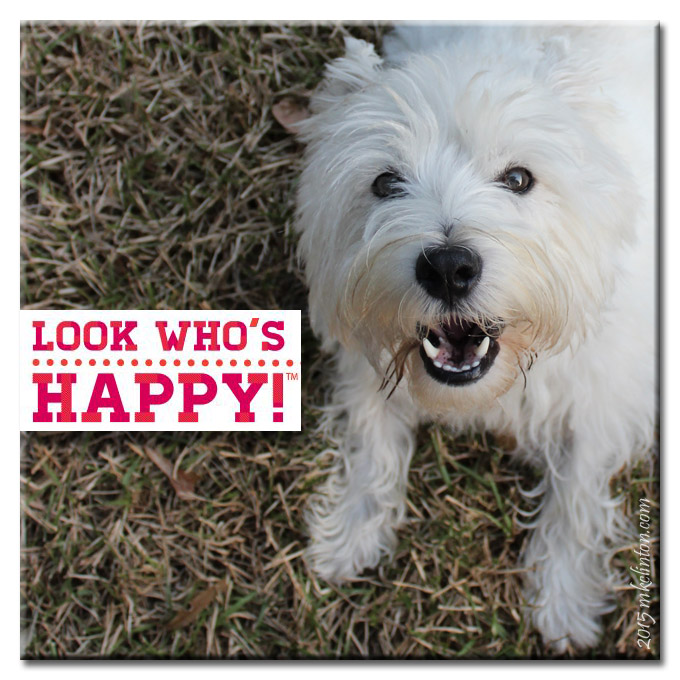 White West Highland Terrier smiling with bag of treats