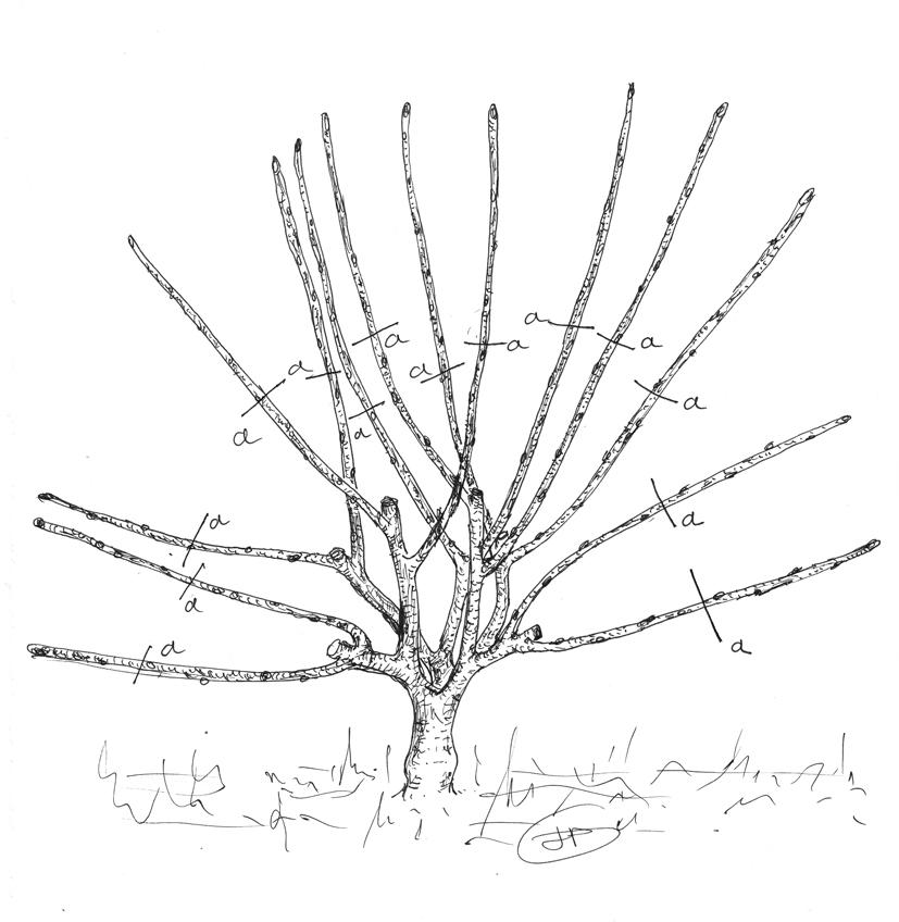 les secrets de la taille et de la greffe des arbres. Black Bedroom Furniture Sets. Home Design Ideas
