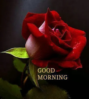 good morning msg,good morning hd,good morning flowers,good morning hindi,good morning wishes,good morning gif,good morning message,good morning image