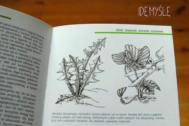 zbiór roślin, ryciny, recenzja książki, jadalne chwasty
