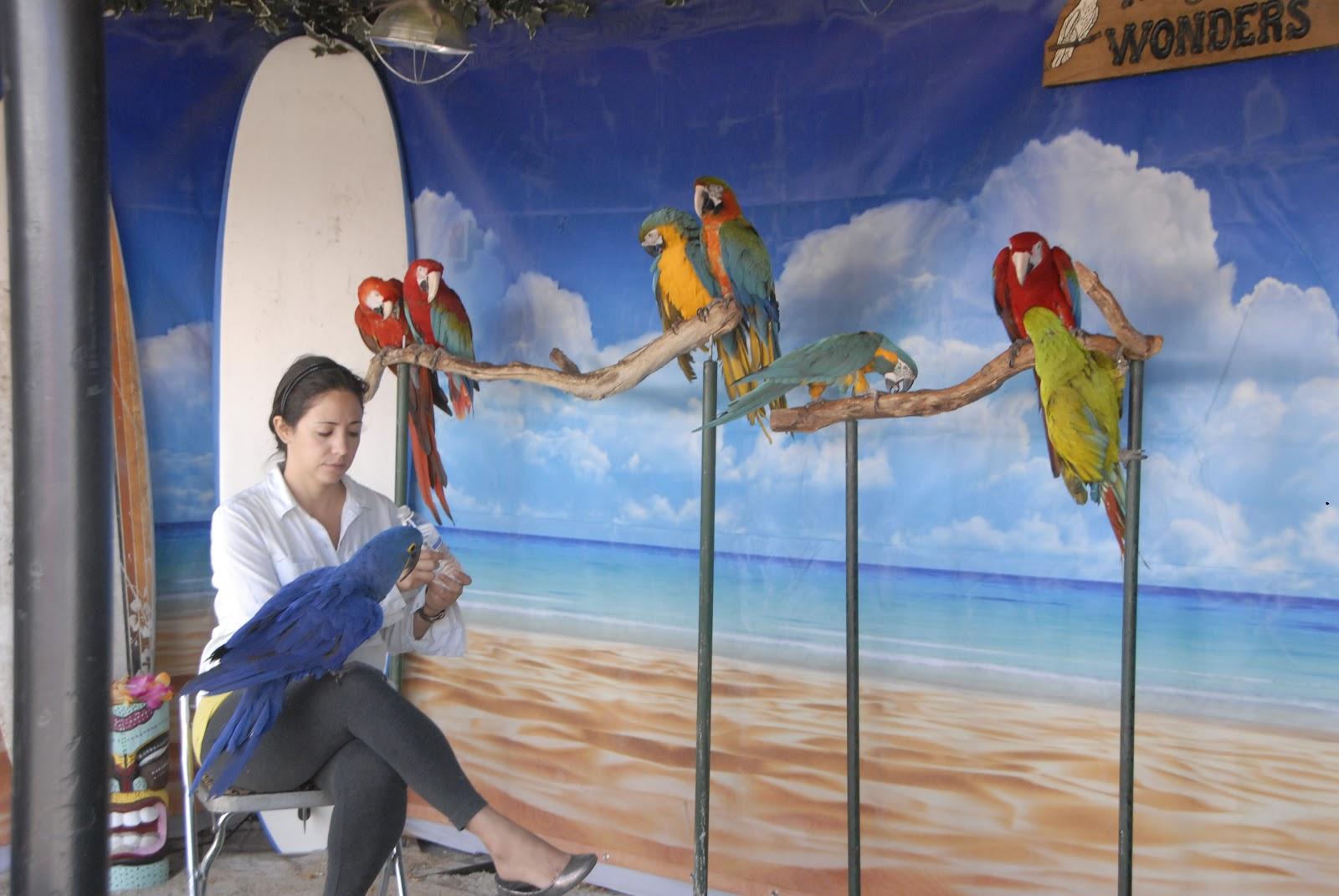 So many parrots at the Del Mar Fair