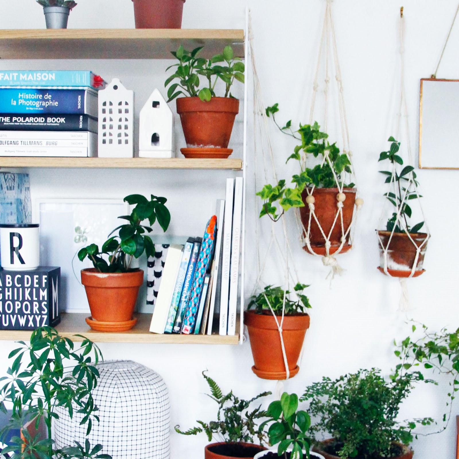 merci raoul conseils pour l 39 entretien de nos petites plantes vertes. Black Bedroom Furniture Sets. Home Design Ideas