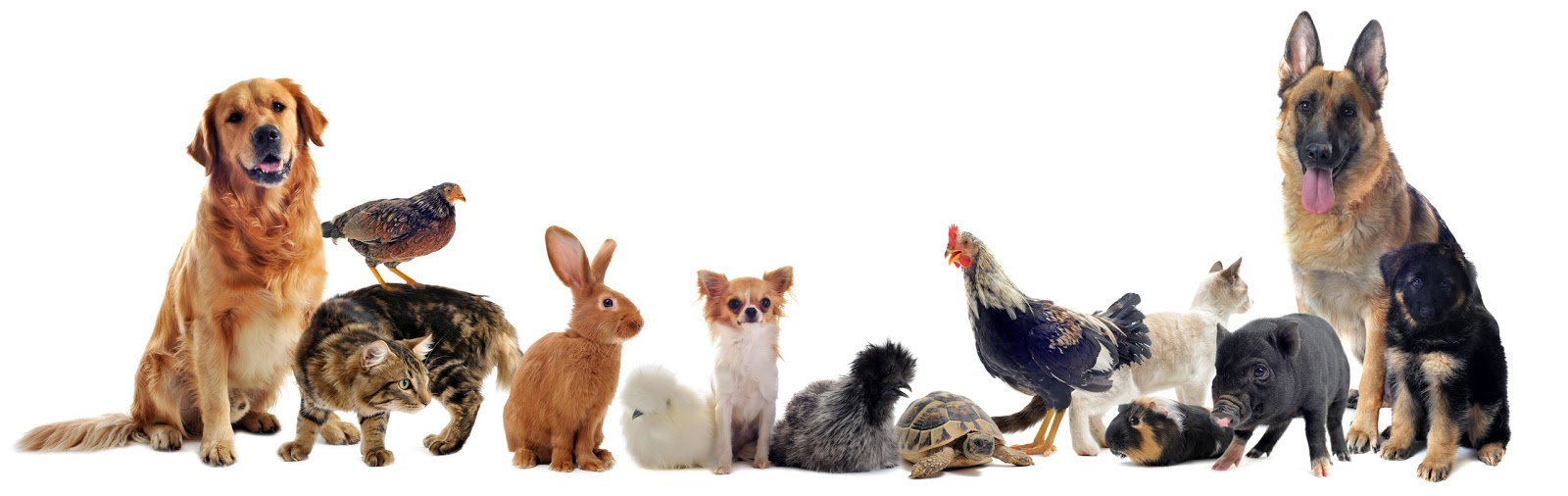 نتيجة بحث الصور عن حيوانات اليفة