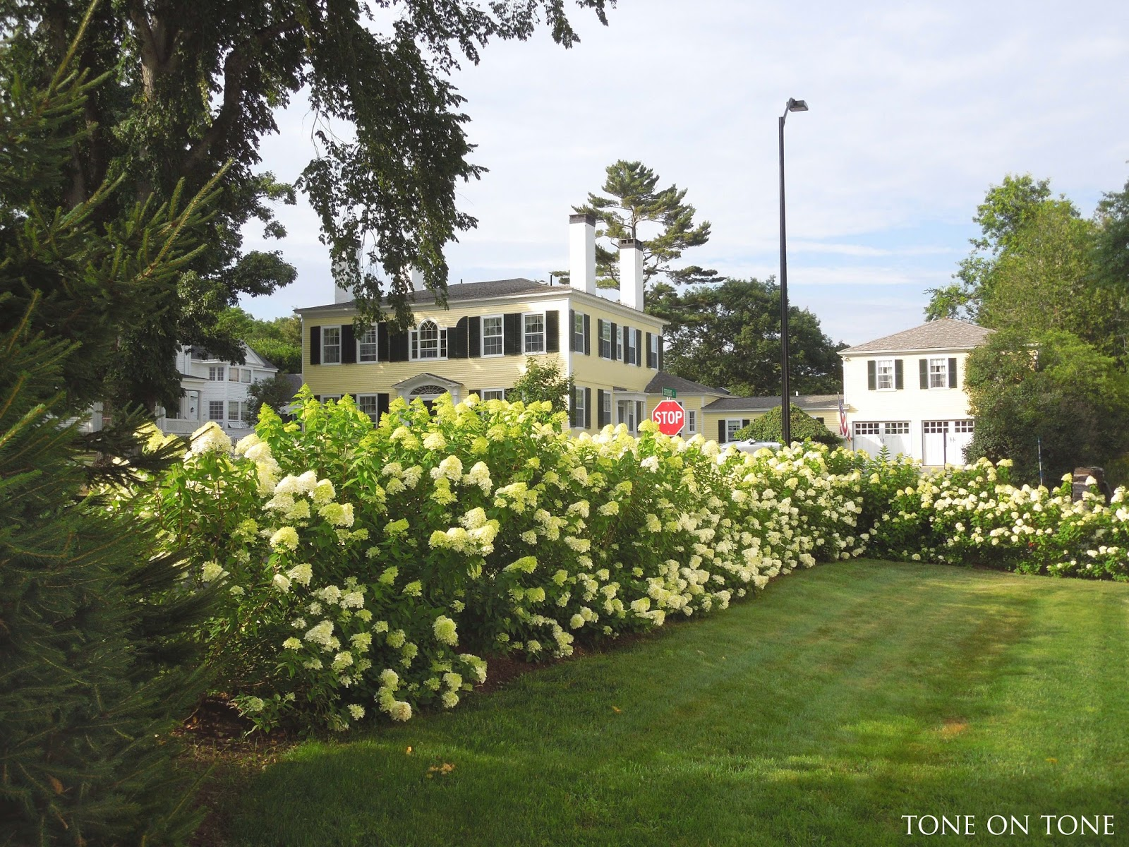 Limelight Hydrangea Hedge Home Design Ideas - From our breakfast and family rooms we look out to this stunning view of stately historic houses ancient elm trees and the limelights